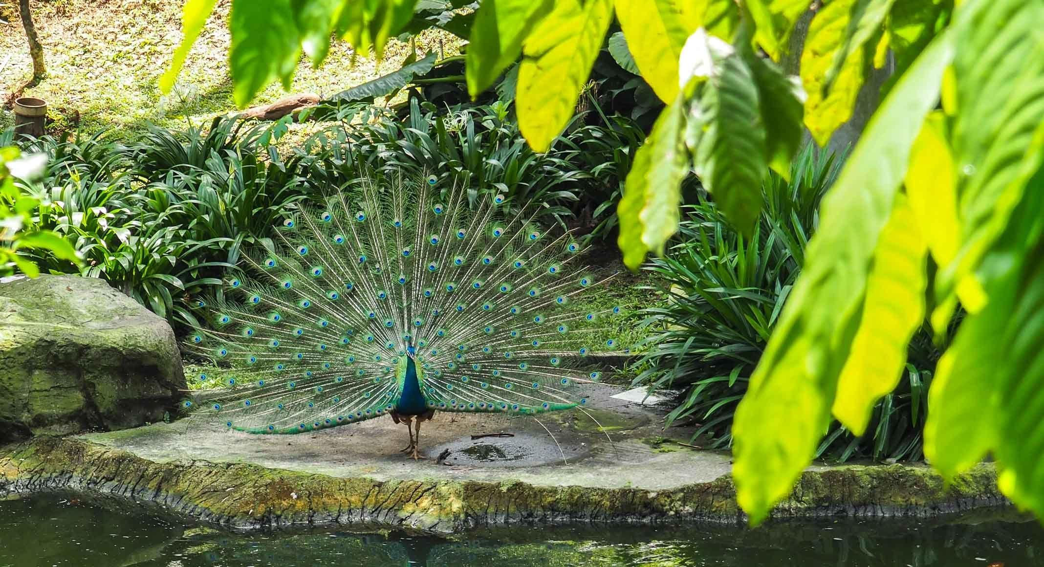 الاماكن السياحيه ماليزيا كوالالمبور حديقة طيور كوالالمبور