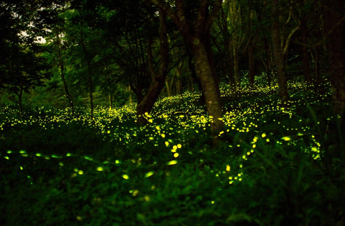 ماليزيا سيلانجور الاماكن السياحيه حديقة الفراشات المضيئه