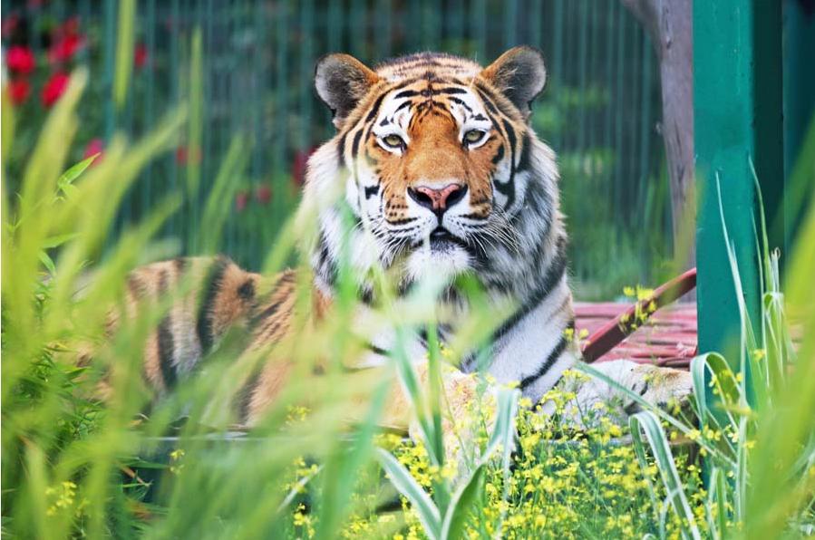 تركيا اسطنبول اهم الاماكن السياحيه حديقة الحيوانات فاروق يالجين