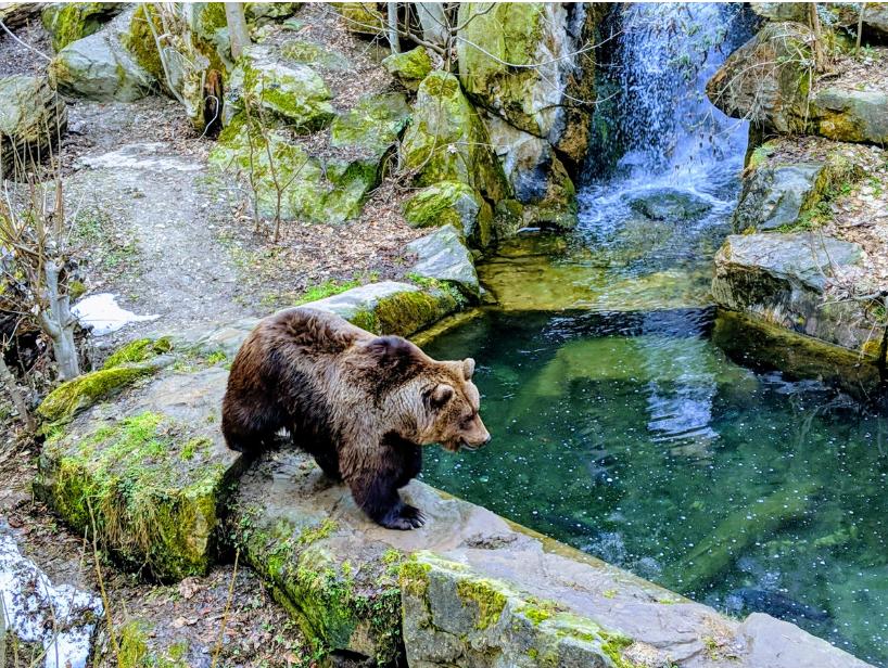 النمسا انسبروك اهم الاماكن السياحية حديقة حيوانات الالب