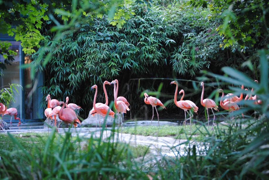 النمسا فيينا اهم الاماكن السياحية حديقة حيوانات فيينا شونبرون