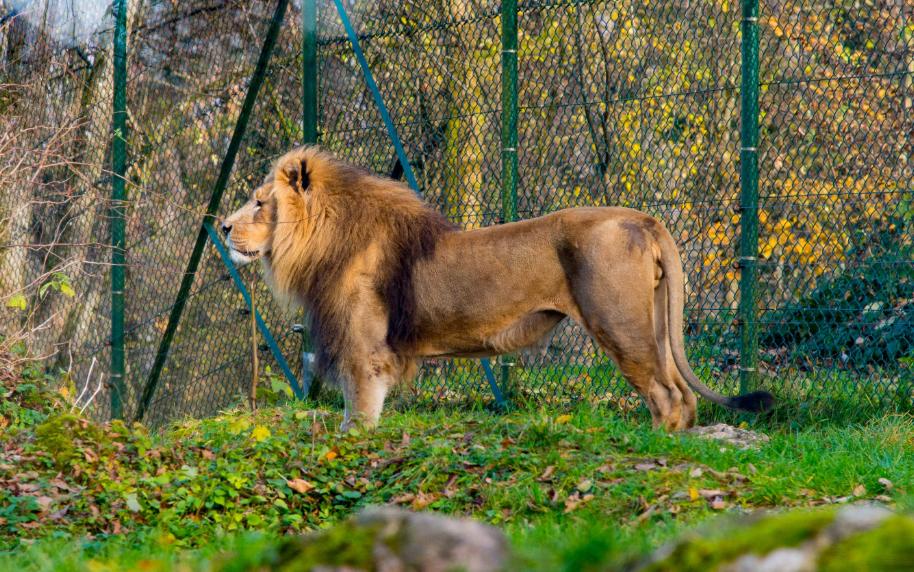 النمسا سالزبورغ اهم الاماكن السياحية حديقة حيوانات سالزبورغ